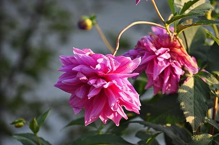 Makro, lilled, loodus, kevadel, Lähis Joonis, kollane, taim