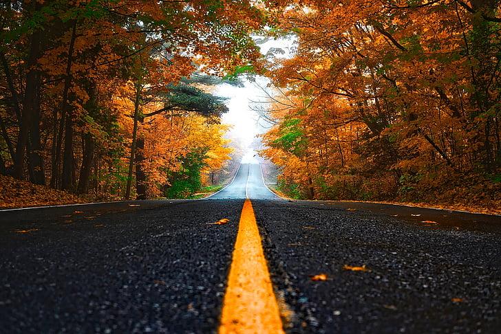 Sügis, sügisel, metsa, puud, metsas, Road, Drive