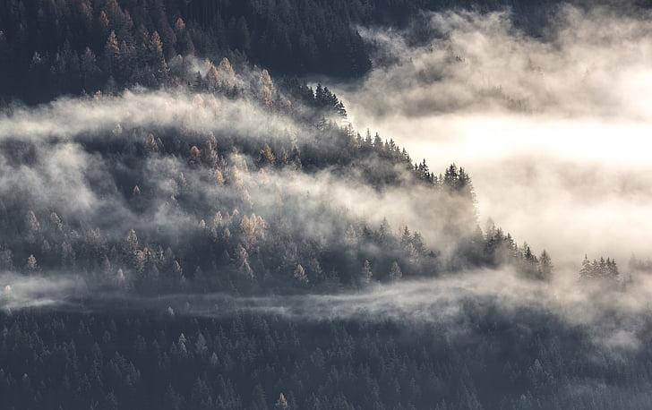 bosc, paisatge, boira, natura