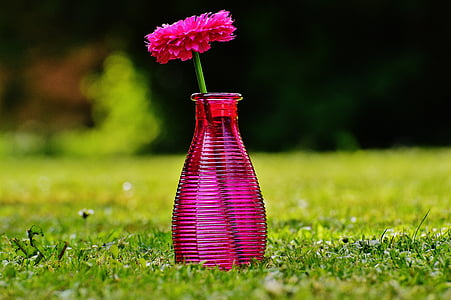 Vase, Glas, Blume, Dekoration, Rosa, transparente, Deko