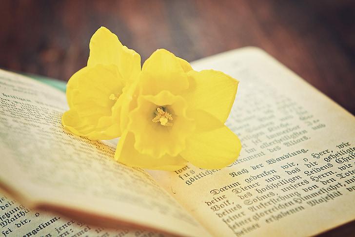 grāmatas, lūgšanu grāmata, vecais, reliģija, puķe, Narcissus, aizveriet