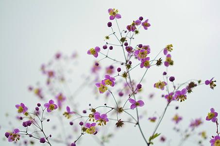 flor, floral, flor, natura, primavera, l'estiu, flor