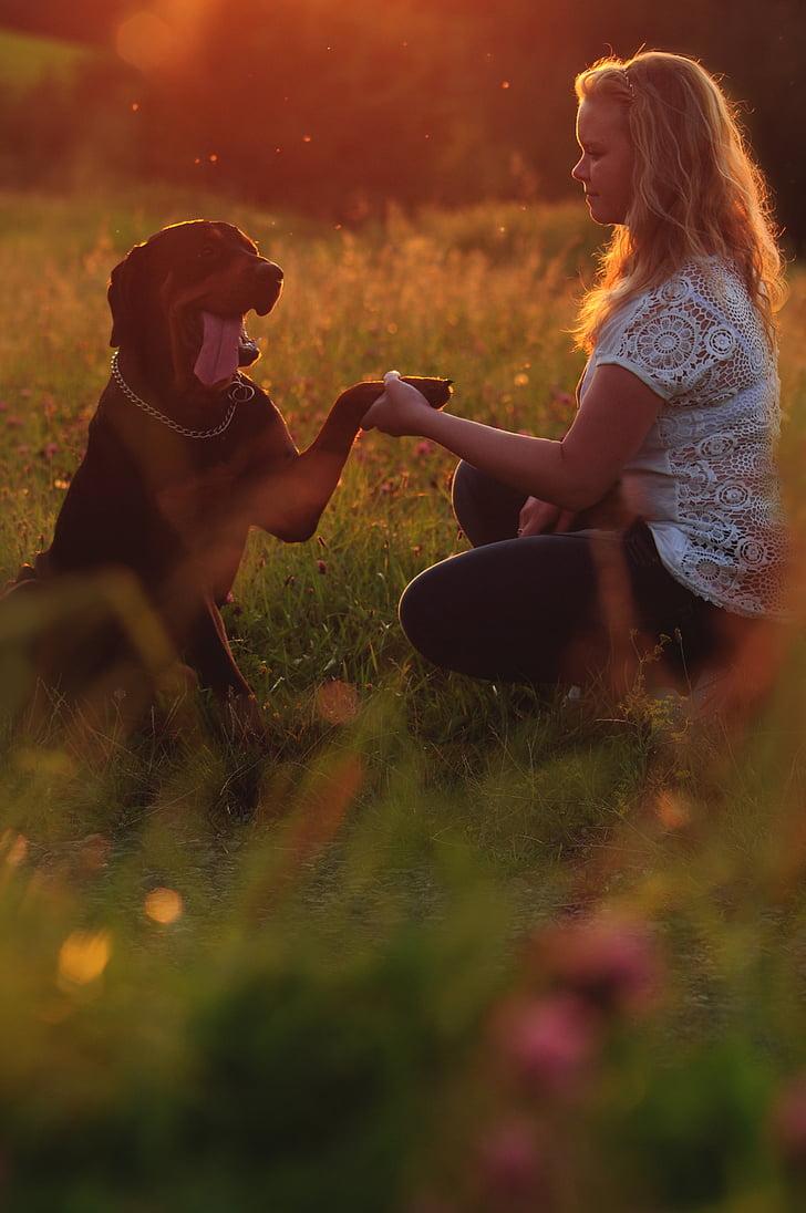 собака, животное, Дружба, Лето, Закат, Боке, M42