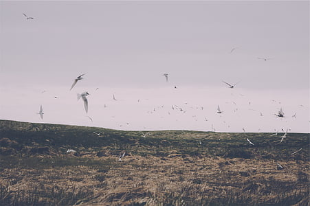 ramat, blanc, ocells, volant, dia, animals, gran grup d'animals