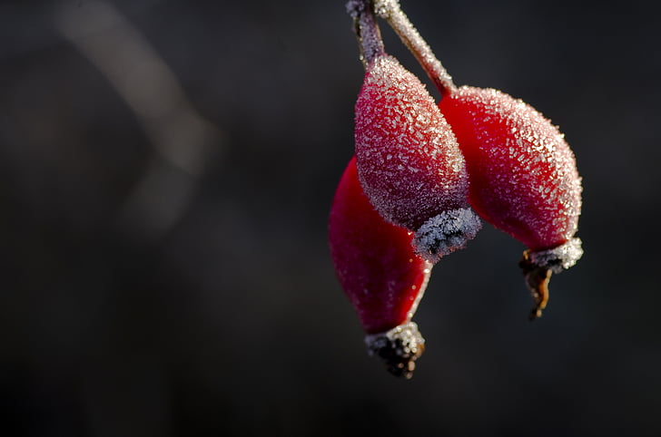 rose hip, hiffe, frost, winter, hoarfrost, ice, cold