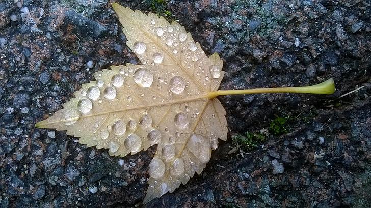 ฤดูใบไม้ร่วง, ใบ, ระบบน้ำหยด, หยดน้ำ, ใบ, แมโคร, น้ำค้าง