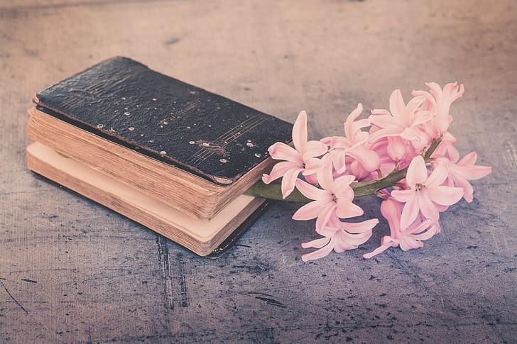 buku, lama, digunakan, bunga, merah muda, eceng gondok, wangi bunga