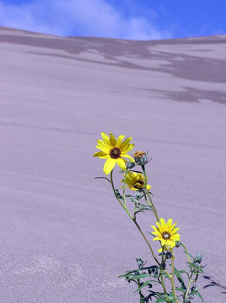dunes de sorra, Parc, Nacional, preservar, paisatge, flor, planta