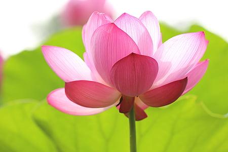 natura, terra, vida, flor, flor, bonica, floral