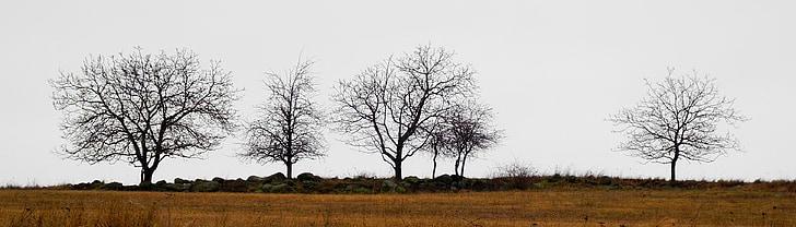 träd, silhuetter, Horisont