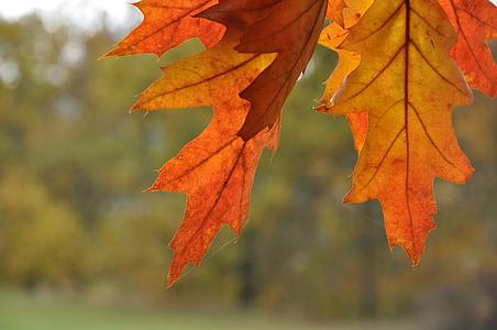 autumn, nature, foliage, landscape, autumn leaves