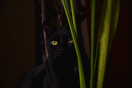 cat, black, kitten, black cat, animals, whiskers, cat's eyes