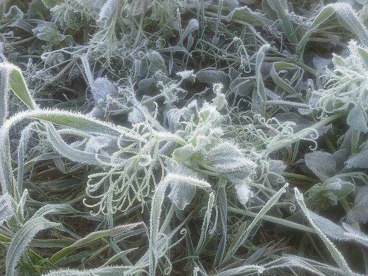 frozen, frost, snow crystals, cold, hoarfrost, grass, plant