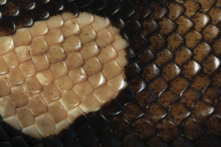 scale, reptile skin, pattern, brown, structure, texture, nature
