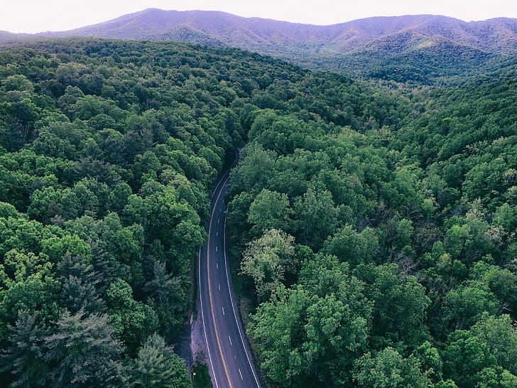 verd, arbres, planta, natura, bosc, carretera, viatges