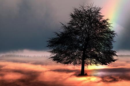 дърво, дъга, небе, фентъзи, природата, мистични, облаците