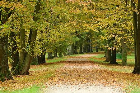 camí al parc, fullaraca, Parc, tardor, Parc de tardor, romàntic, Stromovka