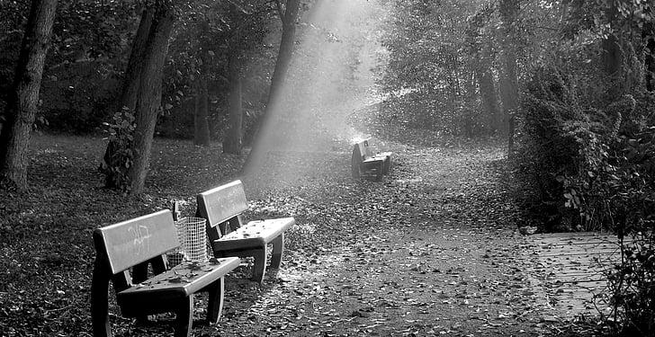 Banc, a peu, bosc, anar a passejar, relaxar-se, Banc, relaxació