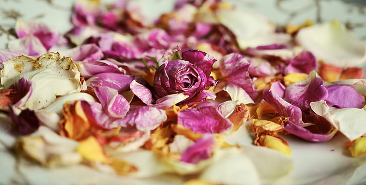 rose petals, roses, fragrance, fragrances, petals, withered, romantic