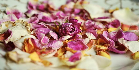 pètals de Rosa, Roses, fragància, fragàncies, pètals, marceix, romàntic