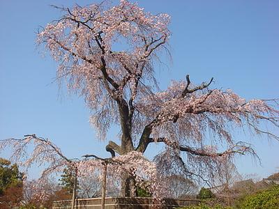 Bắc Kinh, Hoa anh đào, cung điện mùa hè, mùa xuân
