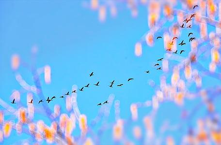 Angsa, perahu layar, langit, biru, warna, Québec, burung