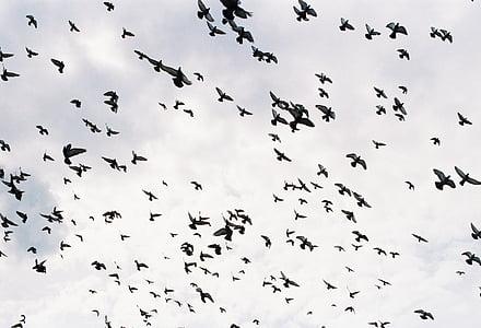ocells, ocells volant, grup d'ocells, aus voladores, volar, Dom, desordre