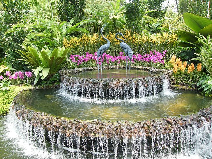 orchideeën, Singapore, plant, botanische tuin, Blossom, Bloom