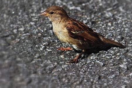 bird, small bird, animal, small, wildlife, outdoor, beak
