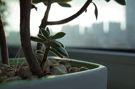 potted plant, flower, plants, veranda, fleshy in this, a fleshy plant