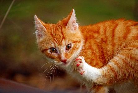cat, kitten, cat baby, mieze, paw
