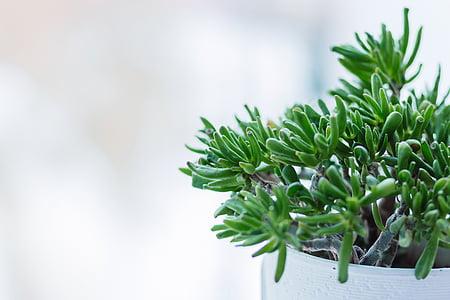 thực vật, Sân vườn, Hoa, cánh hoa, màu xanh lá cây, lá, lọ hoa