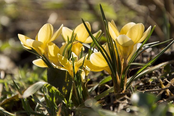 lill, kollane lill, loodus, ilus lill, lilled, Aed lill, kollane