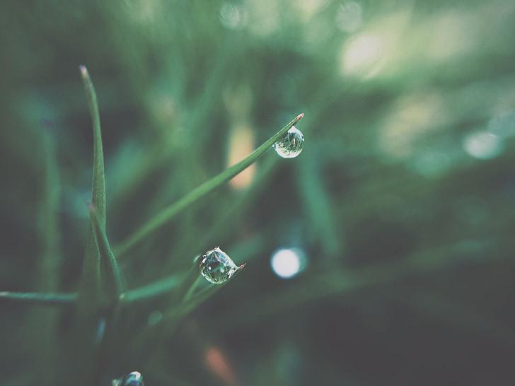 น้ำค้าง, หญ้า, พืช, สีเขียว, ธรรมชาติ, หล่น, อย่างใกล้ชิด