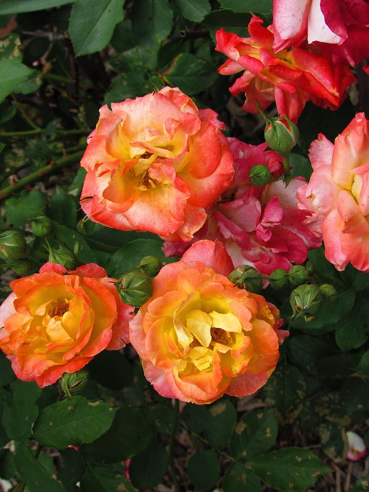 flors, multicolor, flor, floral, vibrants