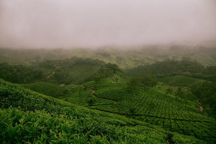 green, field, daytime, cloud, clouds, grass, tea tree