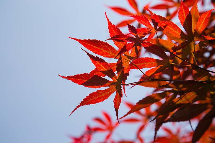 fulles vermelles, cel, el paisatge