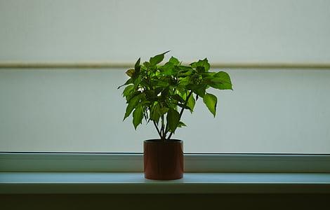 hijau, tanaman, coklat, keramik, kontainer, panci, interior