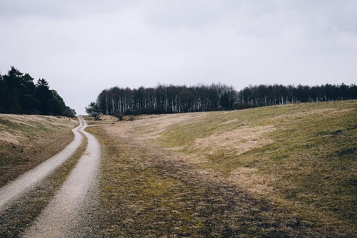 chmury, polnej drodze, trawa, pole trawa, gruntów, drzewa, drogi