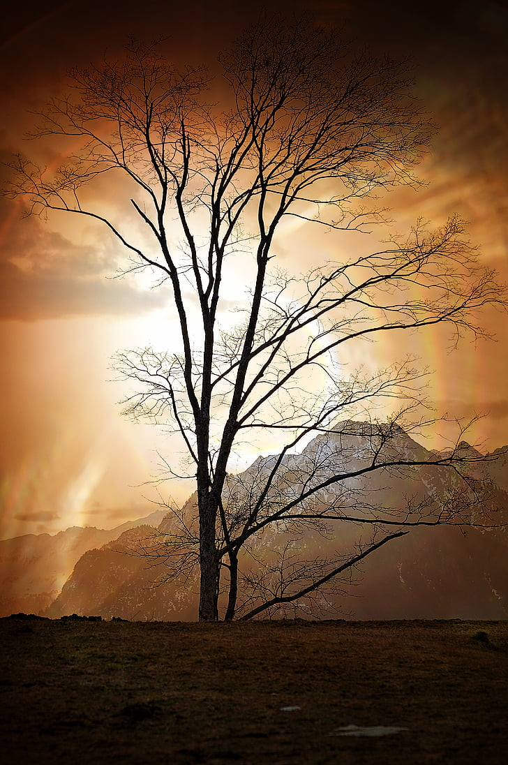 tree, landscape, mountains, mountain peaks, outlook, sunrise, lighting