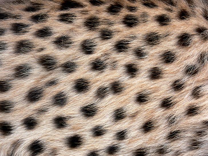 besplatna crna afrička maca djevojka dobiva seksualnu masažu