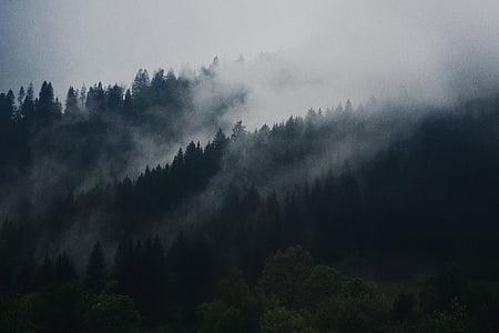 fred, llum natural, boira, boira, bosc, cel gris, paisatge