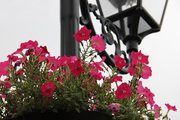 flor, làmpades europees, arquitectura europea, flors, bonica, flors vistoses, close-up