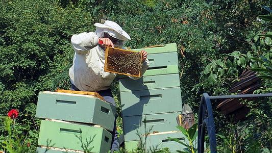 apicultor, abelles, insecte, rusc, natura, mel, pintes