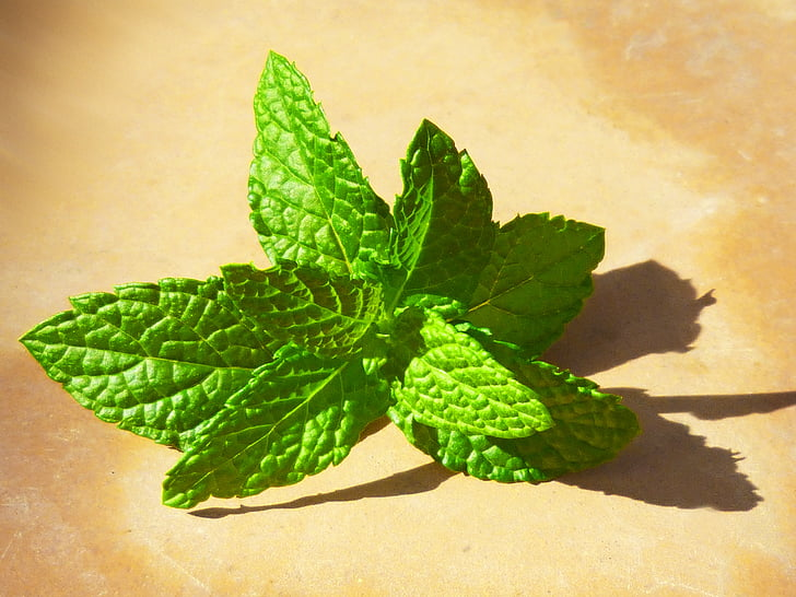 mint, fresh, leaves, green