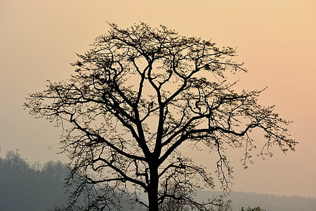 dawn, dusk, fog, silhouette, sunrise, tree
