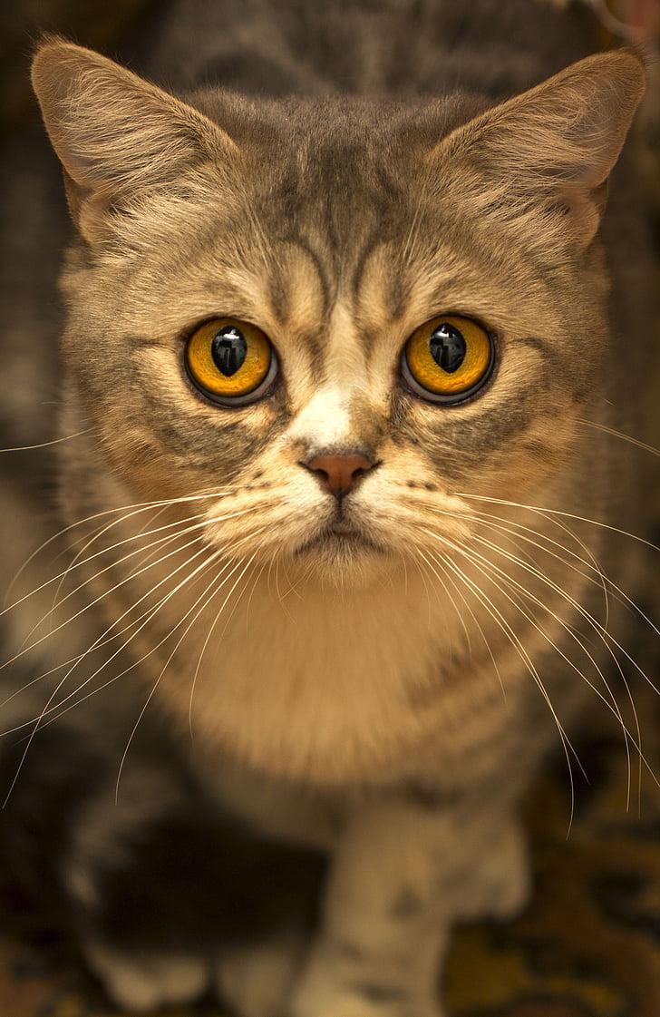 černá kočička detailní tumblr