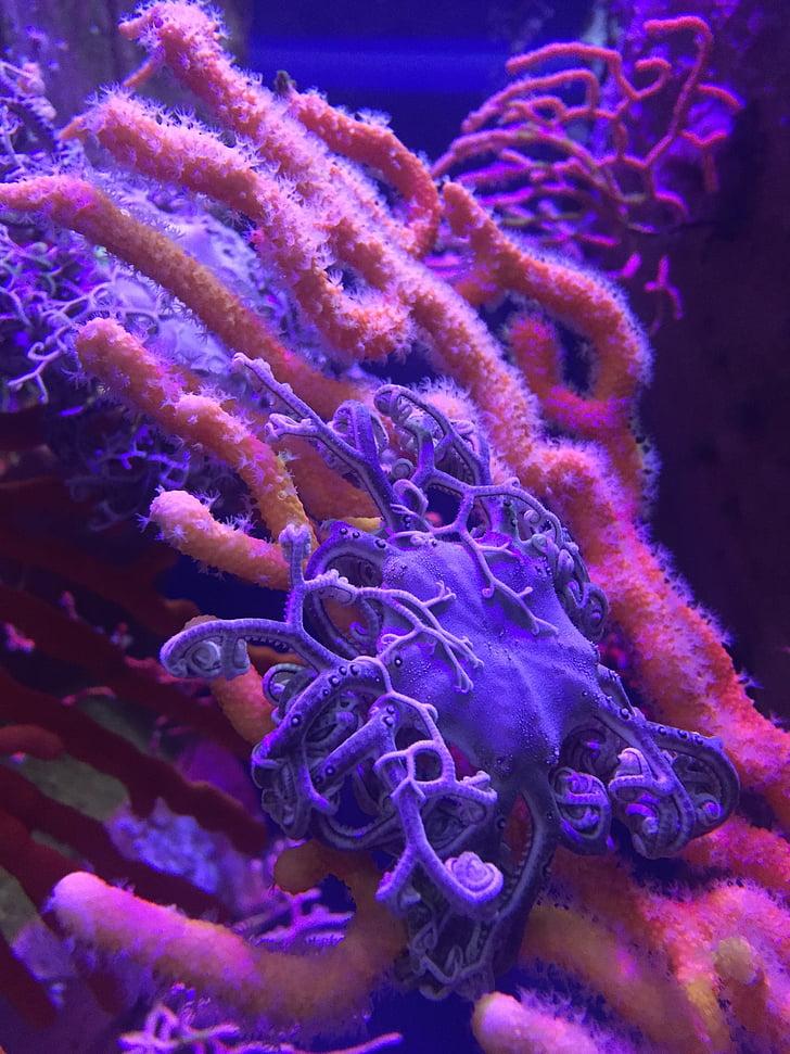 oceà, Aquari, sota l'aigua, Marina, Coral, blau, escull de corall