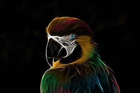 папагал, Ara, птица, цветни, fractalius