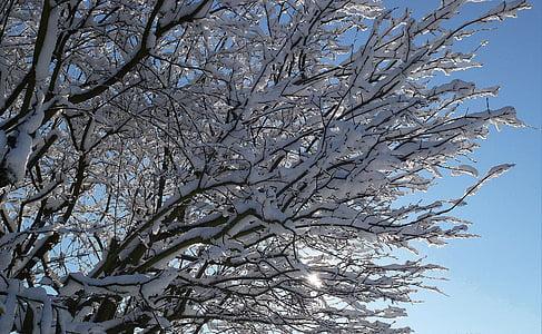 Zimní, sníh, slunce, Zimní, stromy, Příroda, chlad